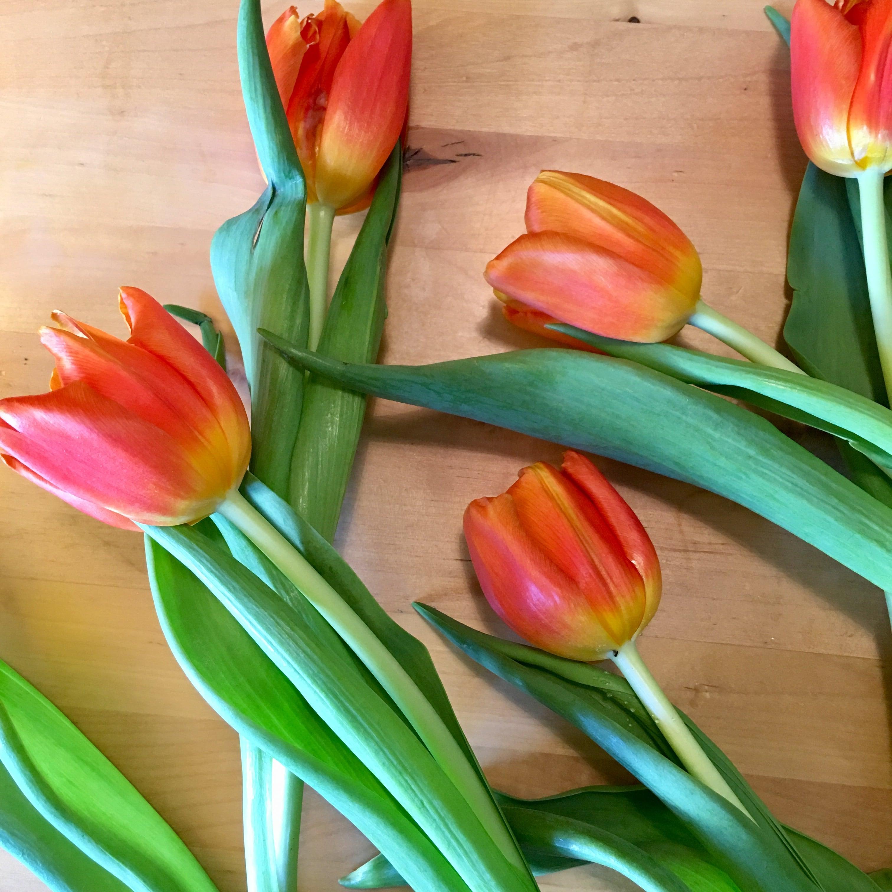 Auf dem Bild sieht man orangene Tulpen.